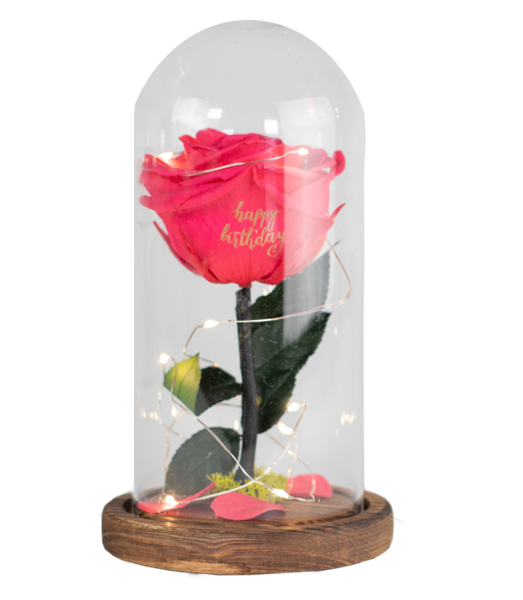 DOME - preserved rose - Bloomsfully Wholesale Flowers