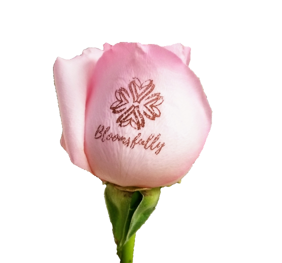 "Personalized ROSES  ""logo or message"" (20 Stems Per Bunch) - Bloomsfully Wholesale Flowers"
