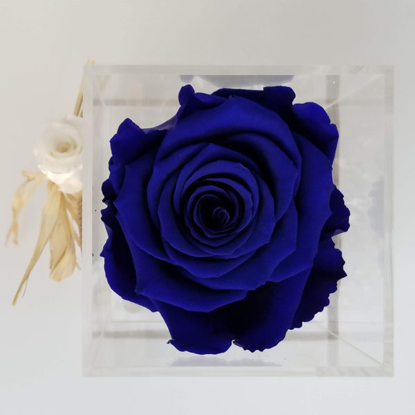 LUXURY ONE - Preserved Rose