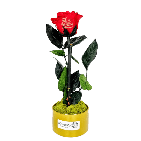 Preserved Rose with message on the rose petal (10 Units) - Bloomsfully Wholesale Flowers