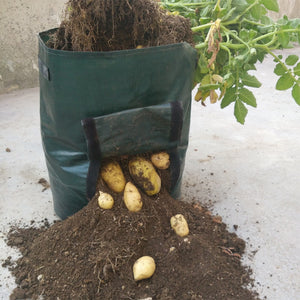 Vegetable Garden Growing Bags