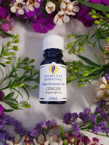 Ginger Essential Oil-Gypsy Divine-Gypsy Divine