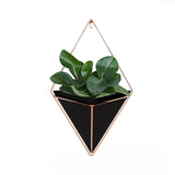 Large Hanging Wall Planter - Lifelook Store