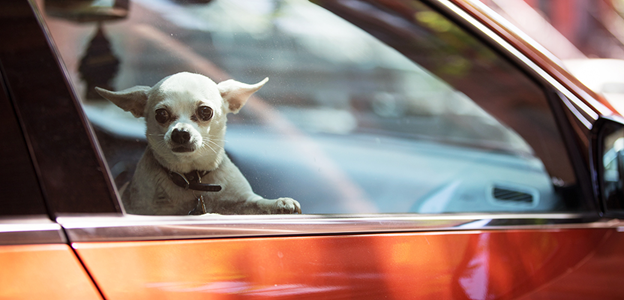 Travelling tips for pets via car