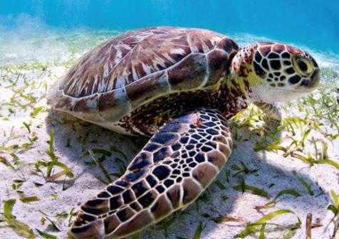 TURTLE BREEDS THAT ARE SAFE TO BE HOME PETS