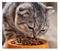 BEST TYPE OF CAT FOOD FOR YOUR PET
