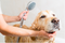 FACTS ABOUT DOG SHAMPOOS