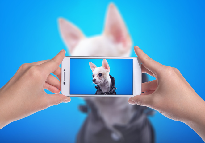 Your dog, the next Instagram icon!