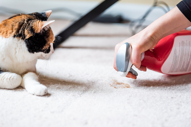14 CAT CLEANING TIPS