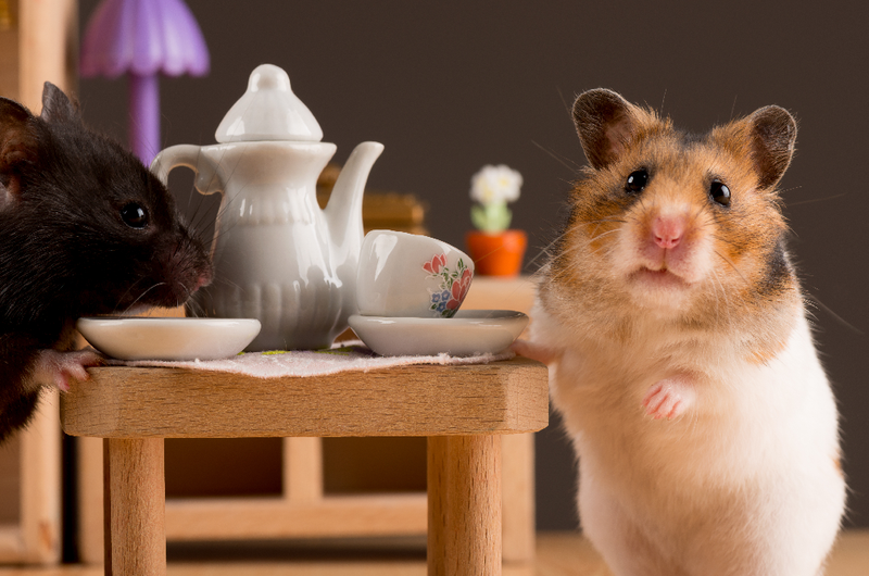 5 Must Know Tips on How to Care for Your Pet Hamster