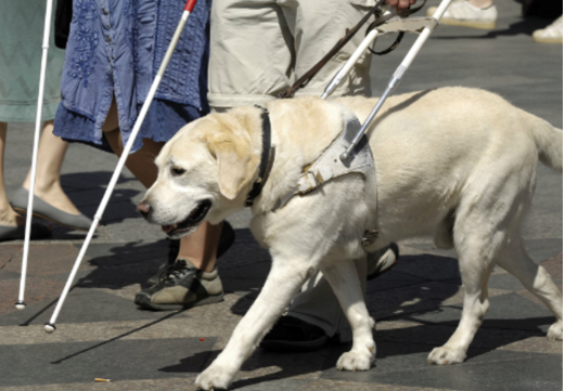 DOG BREEDS TO HELP THE HANDICAPPED