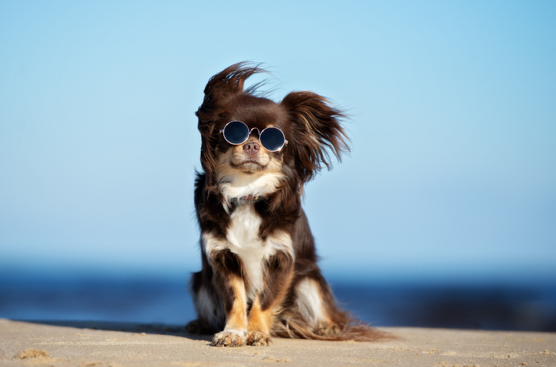 FIVE TIPS TO KEEP IT DOGGY-COOL THIS SUMMER