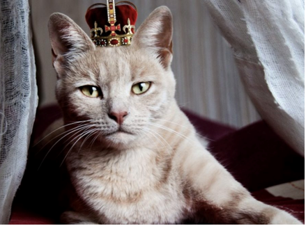 Royal and Rare Cat Breeds