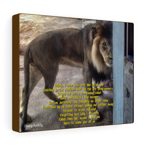 Lion Canvas Gallery Wrap
