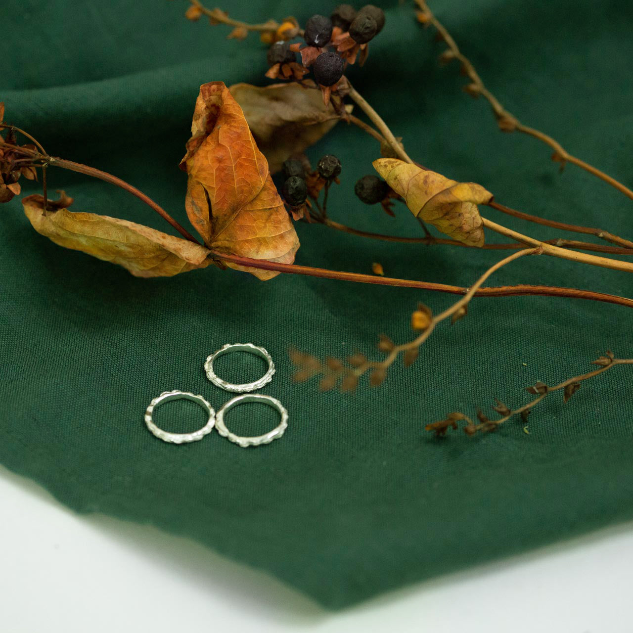 scattered seed rings on green background with dried flora