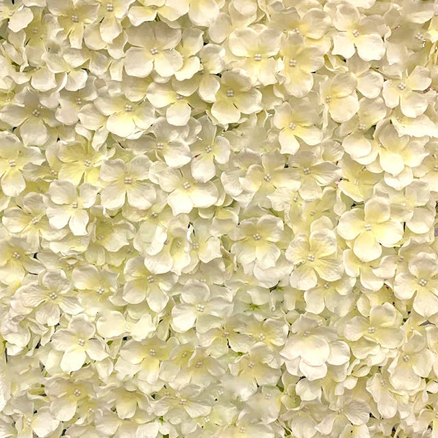 Cream Petal Flower Wall Hire | Event Hire Wellington
