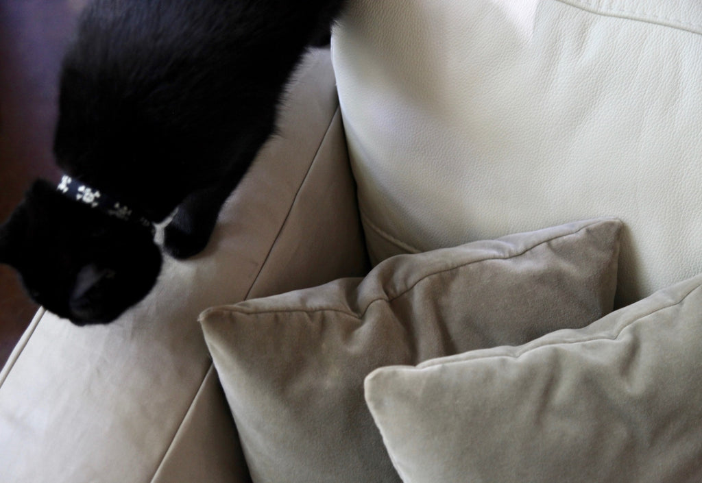 Faunamade Black Cat on Couch Cover DIY
