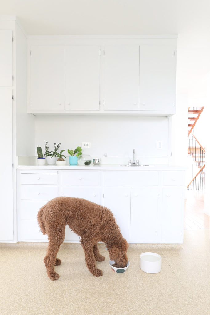 Fifties-era kitchen with linoleum floors and brown standard poodle dog and white cabinets in Faunamade blog post