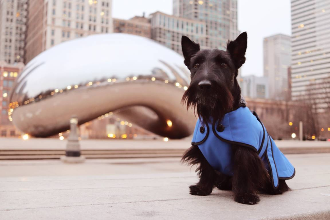 chicago pet friendly
