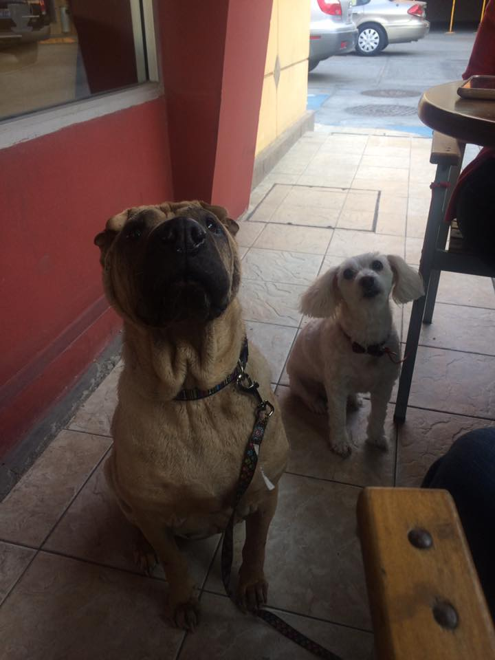 cafeteria-pet-friendly-tijuana