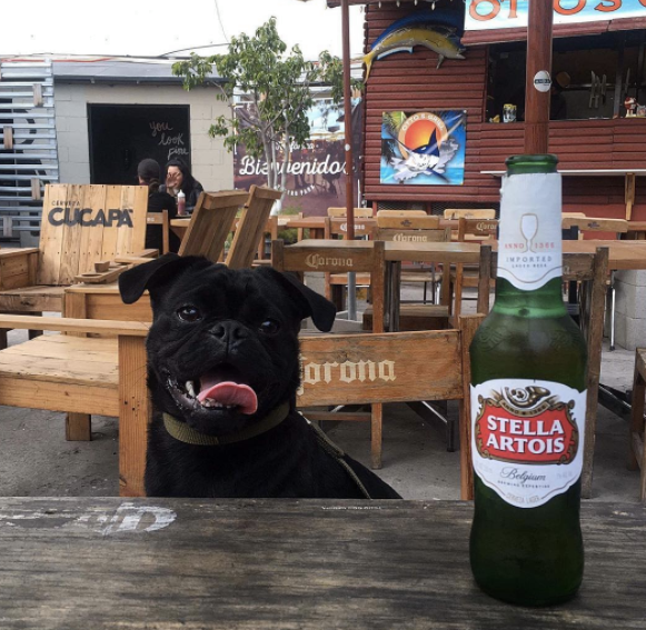 pet-friendly-tijuana