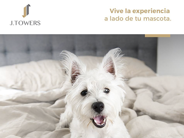 pet-friendly-hotel-j-towers