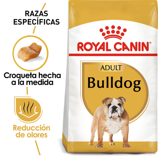 Bulldog Adulto
