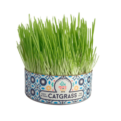 Cat Grass de Trigo Un Dos Treats