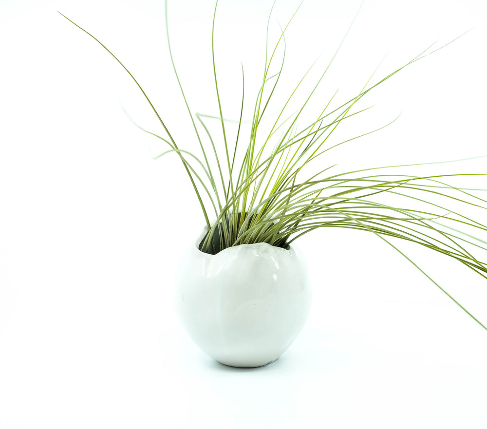 New Beginning Vase Planter 4.5""