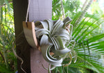 Large Ceramic Air Plant Cradle - Gloss White Speckled Buff