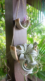 Small Ceramic Air Plant Cradle - Gloss White Speckled Buff