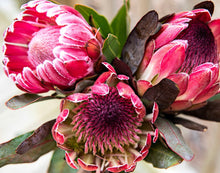 Load image into Gallery viewer, Pretty Protea - Paint by Number