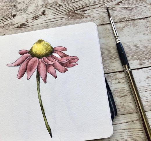 Sketch & Paint Lesson - Cone Flower