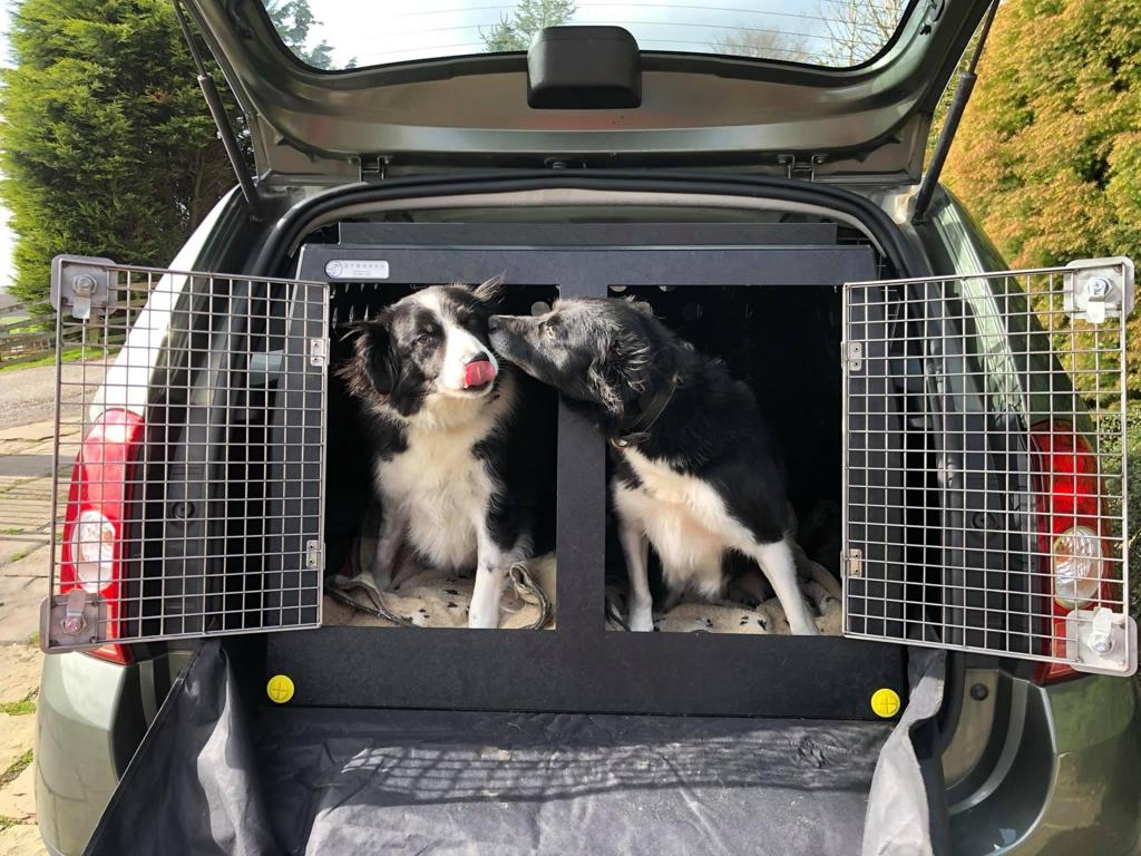 7 Reasons You Should Use a Dog Car Crate