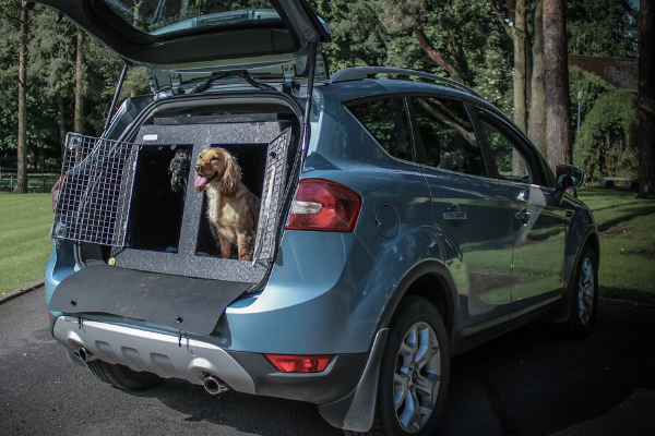 Two Cocker spaniels inside a dt box dog crate.  The dog crate is in a blue ford Kuga SUV.