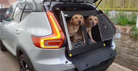 Two ladradors in our Volvo XC40 Dog Car Crate