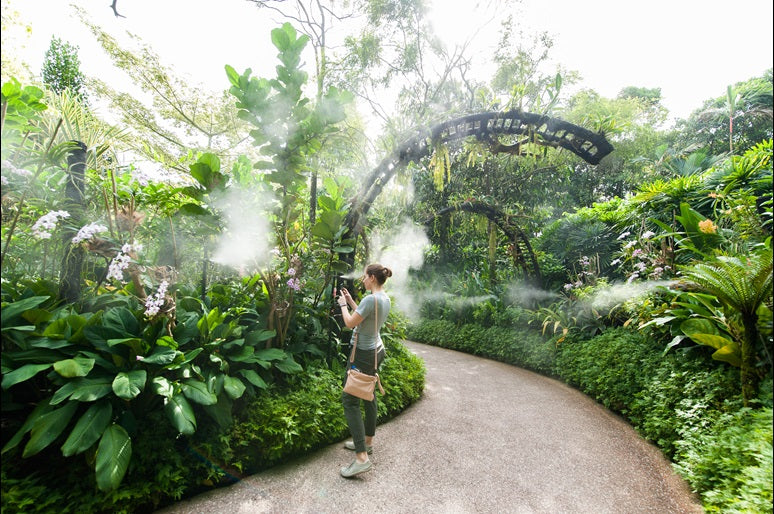 Virtual Healing at Singapore's World-Class Botanic Gardens