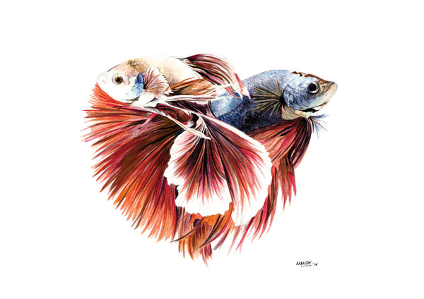 colorful playful Siamese fish print art for sale