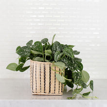 Load image into Gallery viewer, Satin Pothos Plant + Basket