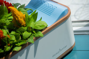 Dewplanter - The Water Generating Planter