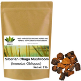 Wild Harvested Organic Siberian Chaga Mushroom Chunks (Inonotus Obliquus) from The Ecologically Clean Shores of Lake Baikal Fresh Harvest Direct from Siberia