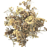 Wild Harvested Organic Tansy (Tanacetum Vulgare) Пижма обыкновенная from Altai Mountains Russia.