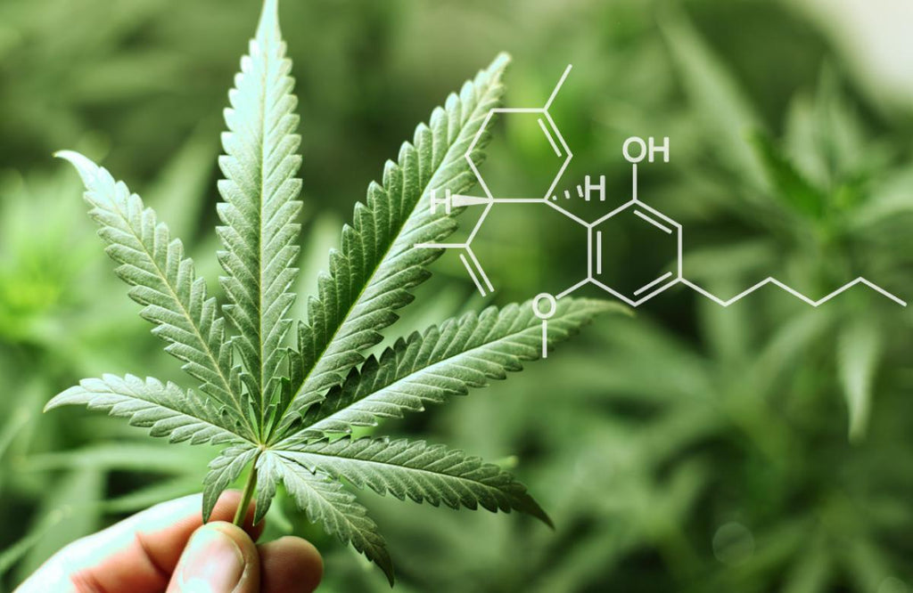 9 Little-known Facts About CBD