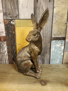 Sitting Golden Hare