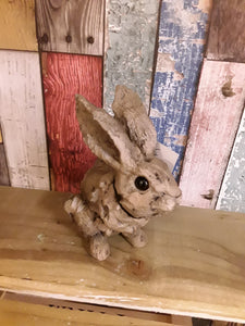 Small wood affect hare