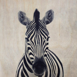 Zebra Frameless Wood Board