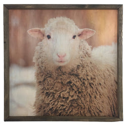 White Sheep <br>Framed Photography