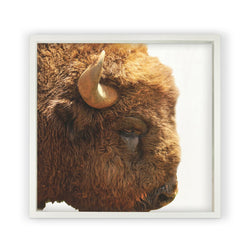 Buffalo <br>Framed Photography