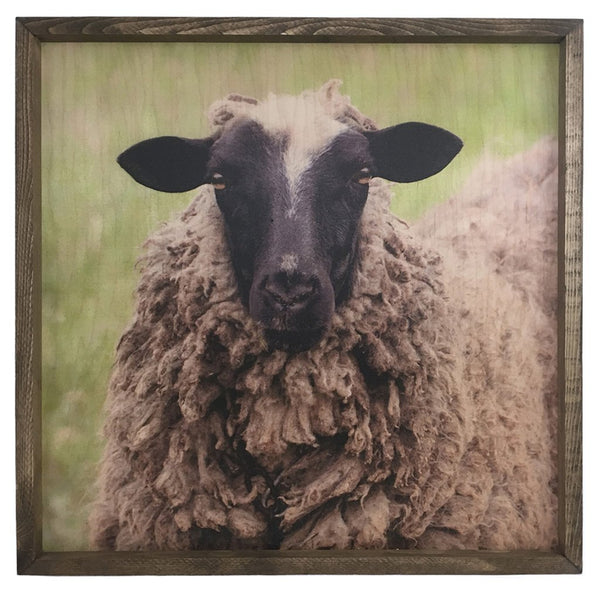 Black Sheep <br>Framed Photography