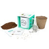 Grow Your Own Peppermint Tea Grow Kit